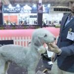 esposizione-internazionale-canina-milano3